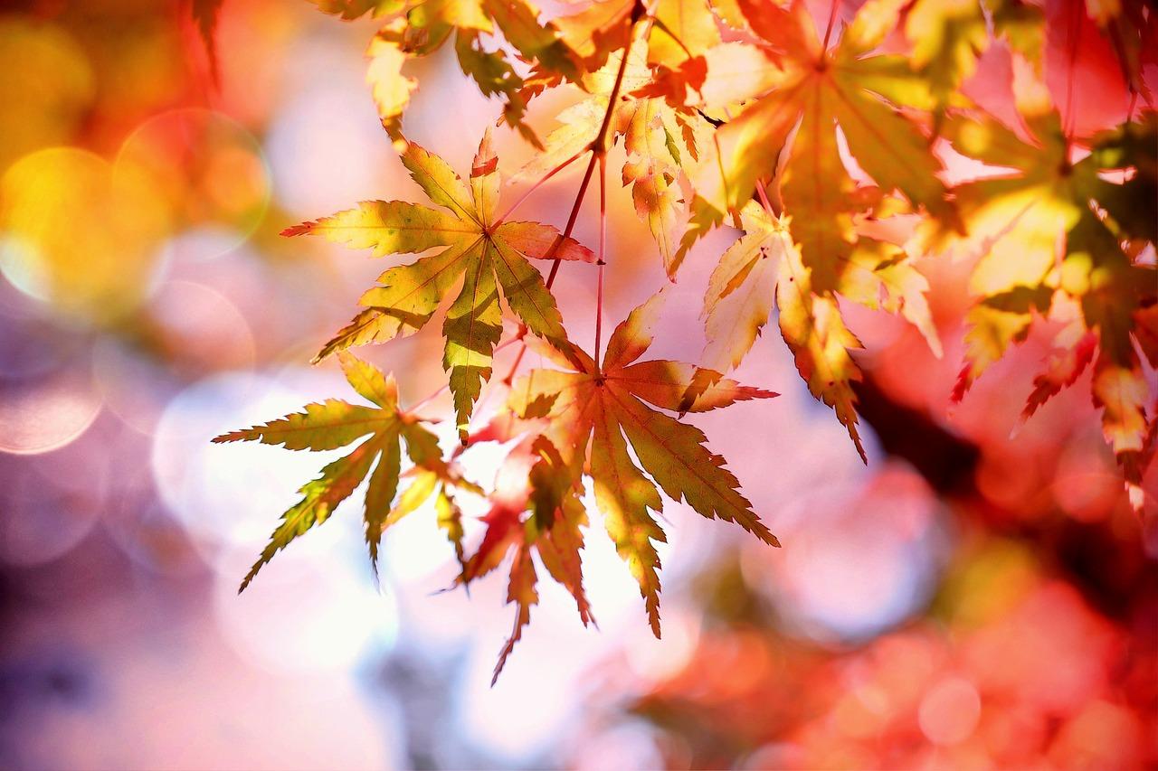 Lesní dny